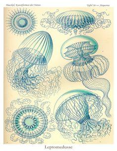 Art Nouveau Jellyfish Poster  Giclee Print  di AdamsAleArtPrints, $7.00