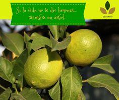El poder del #limón