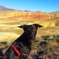 Smile!  #oregon  #paintedhills #traveloregon #dog #mansbestfriend #sevenwondersoforegon #easternoregon  #pnwlove  #nature  #travel  #outdoors  #pnw  #neverstopexploring  #amazingview  #hiking  #travelgram  #hikingtrail  #exploreoregon  #landscape  #landscapephotography  #adventure  #getoutexplore by skyhivemedia