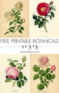 This DIY hanging printable botanical creates a beautiful piece of wall art in no time at all! Plus choose a free botanical print to download.