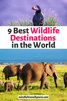 Check out the Best Wildlife Holidays in the World, from tiger safaris in India, bears in Canada to elephants in Kenya. Best wildlife vacations ever! Honeymoon Packing, Honeymoon On A Budget, Honeymoon Pictures, Honeymoon Places, Wildlife Photography, Animal Photography, Best Holiday Destinations, Honeymoon Destinations, Animal Experiences