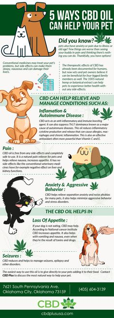 CBD Essence is passionate about helping people lead healthier and happier lives. We offer the best CBD for Pain, Stress & Anxiety. Buy CBD oil online now! Endocannabinoid System, Oils For Dogs, Cbd Hemp Oil, Medical Cannabis, Cannabis Oil, Oil Benefits, Angst, Autoimmune Disease, Pet Health