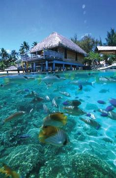 honeymoon - unbeilievably clear water. i def have to go diving there