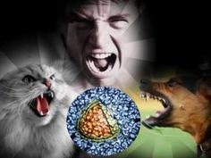 Агрессия Cats, Animals, Gatos, Animales, Animaux, Kitty, Cat, Cats And Kittens, Animal