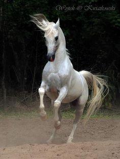 Wojtek Kwiatkowski Equine Photography, Poland