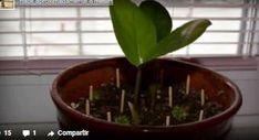 Truco casero para revivir sus plantas con cerillas - e-Consejos