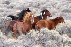 Wild Horses Photo by Terry Spivey -- National Geographic Your Shot