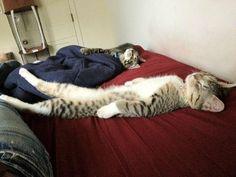 saturday afternoon nap.....