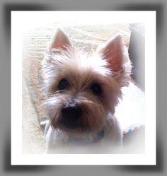 My dog Buddy by Nikki Rinderer