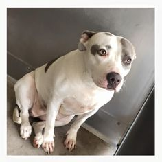 "Please SHARE///URGENT OWNER DIED< PEOPLE DON""T LET DOGS LIKE ALICE GO> ID #A485934 Needs out September 15 909-384-1304 San Bernardino City Shelter San Bernardino , CA — click on link https://www.facebook.com/298927593559439/photos/a.627849284000600.1073741867.298927593559439/840785852706941/?type=1&theater"