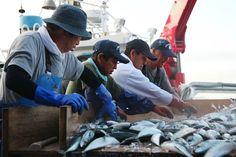 震災1年半の魚市場、復興へ=岩手