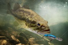8 Bass Lures Fishermen Should Have: Plastic  Worms