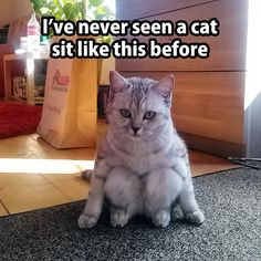 Cat sitting like a human