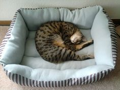 My savannah cat Adelaide. She loves her fluffy kitty bed!