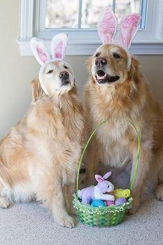 Happy Golden Easter!