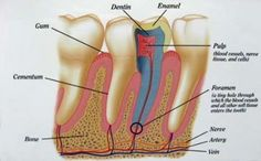 Diagnosis of Root Canal Treatment