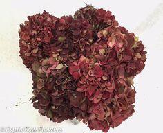 Hydrangea dark red antique