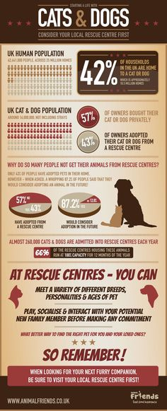 Our new info-graphic displaying results from a recent survey we carried out on Adoption and pet rescue