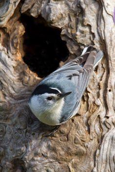 クリスザ·Photog:鳥のための美しい日