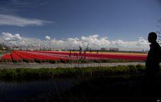 オランダ・アムステルダムから2時間ほど東、デーヴェンターに「ヒューマニタス」という老人ホームがある。