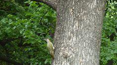 The Woodpecker Song - Jennifer Riegler