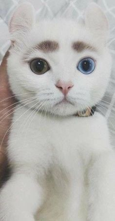 Cute Kitten Names That Start With S except Cute Kittens For Sale In India during Cute Cats Kneading Gif until Pictures Of Cute Cats And Kittens Hd along with Cute Kitten Meowing Gif Pretty Cats, Beautiful Cats, Animals Beautiful, Pretty Kitty, Cute Funny Animals, Cute Baby Animals, Funny Cats, Animals Dog, I Love Cats