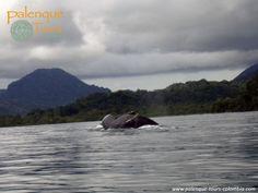 http://palenque-tours-colombia.com/es/about/ Chocó, Colombia