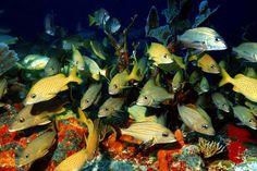"""El turismo asfixia al mayor arrecife coralino de México. """"Si se pierde la diversidad de este hábitat, será para siempre"""". El desarrollo urbano y turístico en el Caribe pone en riesgo al mayor arrecife coralino del país. El Gobierno pondrá en marcha un plan multisectorial para restaurar el arrecife. (Reuters Photographer/Reuters)"""