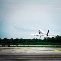 #Magnicharters #Magni #Airplane #Aviación #Aviation