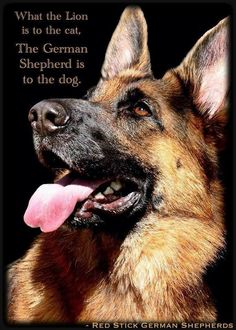 Yep, so true!!! This is just awesome. I <3 my German Shepherd dog!!
