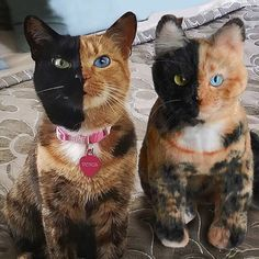 """Send us a picture of your pet, we'll send you a Cuddle Clone. Cuddle Clones is an online company that seeks to """"capture the emotional connection between people and their pets"""" by …"""