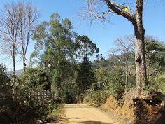 Estrada de Terra. Sul de Minas. Brasil.
