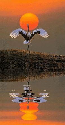Great photo & I love the rippling water. Beautiful Nature Wallpaper, Beautiful Moon, Beautiful Birds, Beautiful Landscapes, Beautiful Images, Animals Beautiful, Amazing Photography, Nature Photography, Nature Animals