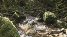 #GIF : Creek | http://gifdrome.tumblr.com/post/47822822739