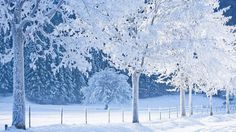 Amazing Snowing Nature Wallpapers : Natures Colors