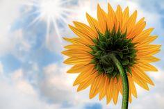 Des scientifiques triplent l'efficacité de la photosynthèse en implantant des nanotubes de carbone dans les plantes