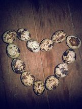 The Speckled Egg, Quail Mail Message Eggs Egg Shop, Valentine Day Gifts, Eggs, Quail, Shopping, Quails, Egg, Valentine Gifts, Egg As Food