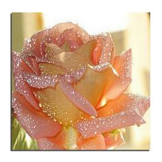 >>>Smart Deals for2015 Drip rose 25X25 New crafts painting diy diamond embroidery kits flower full diamond mosaic cross stitch needlework zx2015 Drip rose 25X25 New crafts painting diy diamond embroidery kits flower full diamond mosaic cross stitch needlework zxThis Deals...Cleck Hot Deals >>> http://id453860197.cloudns.hopto.me/32358702341.html.html images