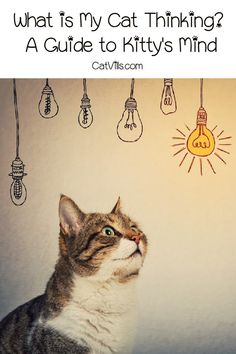 What is my cat thinking? If you're wondering this very question, you'll love our guide to your cat's innermost thoughts! Information About Cats, Mother Cat, What Cat, Cat Care Tips, Outdoor Cats, Cat Behavior, Animal Projects, All About Cats, Cat Facts