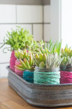 Recycle Old Jars into Succulent Planting Pots with Color-Block Twine