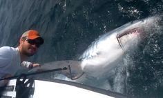 Giant Mako Shark Hooked in Florida Shallows