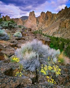 Oregon's High Desert.I want to go see this place one day.Please check out my website thanks. www.photopix.co.nz