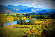 View from Quintessa Winery, Napa Valley