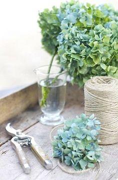 Blue green hydrangeas