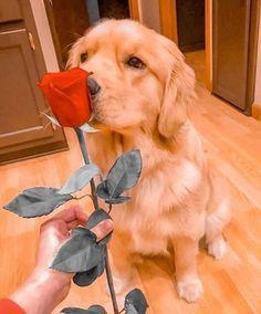 #dog #dogs #dogsofinstagram #doglife #doglovers #doglover #dogslover #dogoftheday #dogmom #dogsofinsta #dogphotography #dogvideos #dogsitting #doglove #dogtraining #dogwalker #dogstyle #puppylove #pet #dogplay #dogplaytime #pupper #puppylove #puppylover  #ilovemydog #dogandpals #pup #pets #doghouse #dogdays Dog Photography, Dog Life, Dog Mom, Dog Days, Puppy Love, Dog Training, Dog Lovers, Pets, Animals