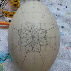 Primera etapa huevo de ñandu