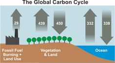 Part A: A Forest Carbon Cycle In Lab you learned about the molecular nature of carbon compounds and the carbon cycle, and its relationship to other biogeochemical cycles such as the nitrogen cycle.