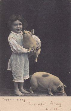 piggy-piggy peaceful valley