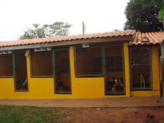Luxury Dog House, Dog Boarding Kennels, Dog Kennel Designs, Types Of Dogs, Horse Farms, Dogs Of The World, Pet Shop, Animal Shelter, Dog Love