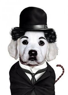 Charlie Chaplin dog version! So cute and adorable!